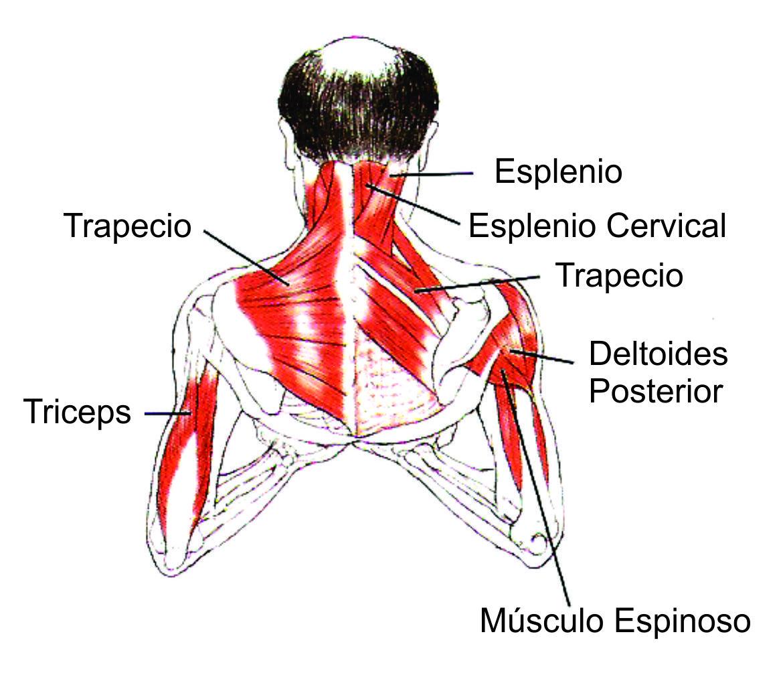 Los medicamentos para el tratamiento protruzy de la columna vertebral